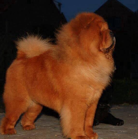 Ch El Custo de los Perros de Bigo